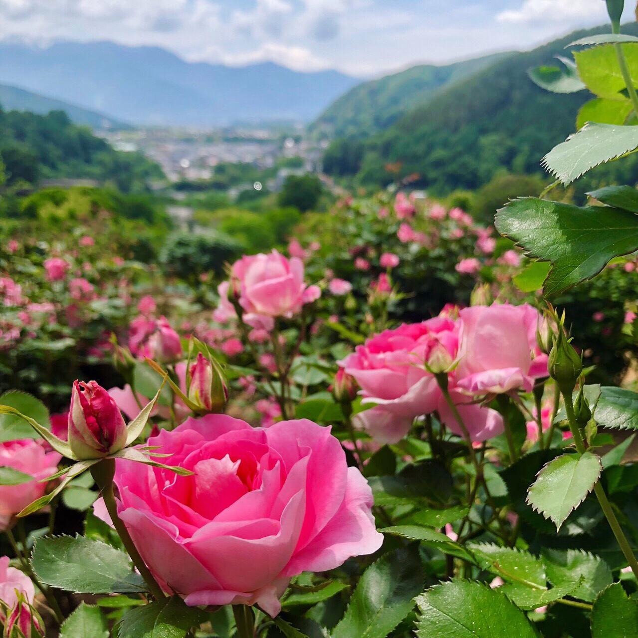 日本人の本質の神の目覚めの合図☆