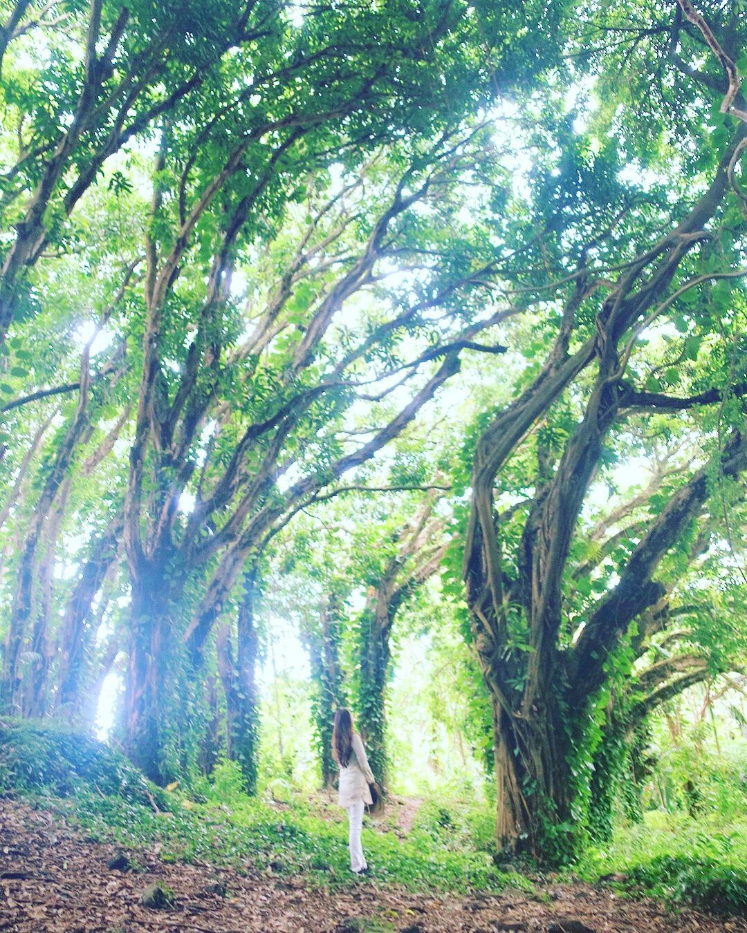 〜光の写真 〜photo by king〜ハワイ島レポ⑨